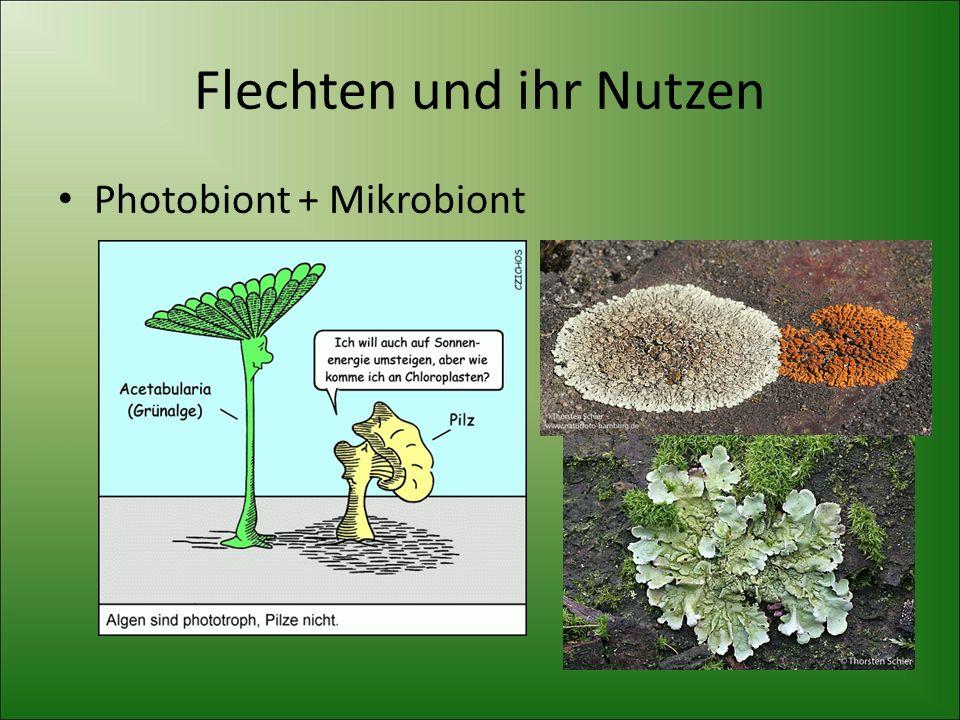 Flechten und ihr Nutzen Photobiont + Mikrobiont