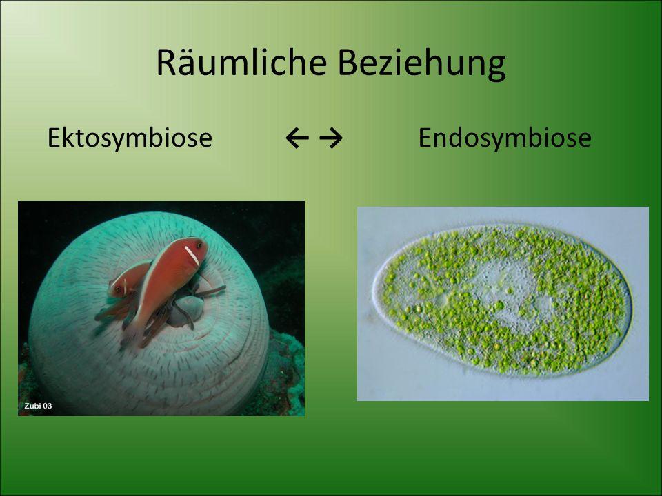 Räumliche Beziehung Ektosymbiose ← → Endosymbiose