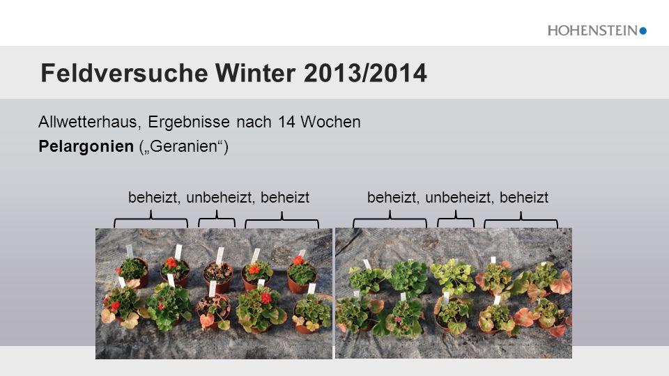 """Feldversuche Winter 2013/2014 Allwetterhaus, Ergebnisse nach 14 Wochen Pelargonien (""""Geranien"""") beheizt, unbeheizt, beheizt"""