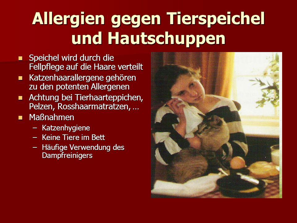 Allergien gegen Tierspeichel und Hautschuppen Speichel wird durch die Fellpflege auf die Haare verteilt Speichel wird durch die Fellpflege auf die Haa