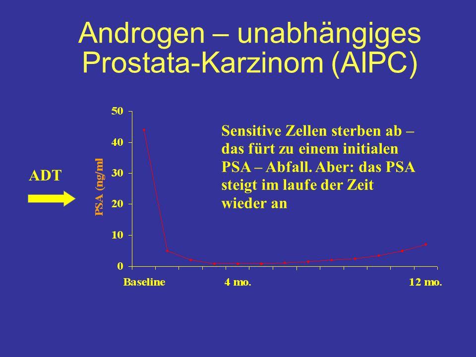 ADT Sensitive Zellen sterben ab – das fürt zu einem initialen PSA – Abfall.