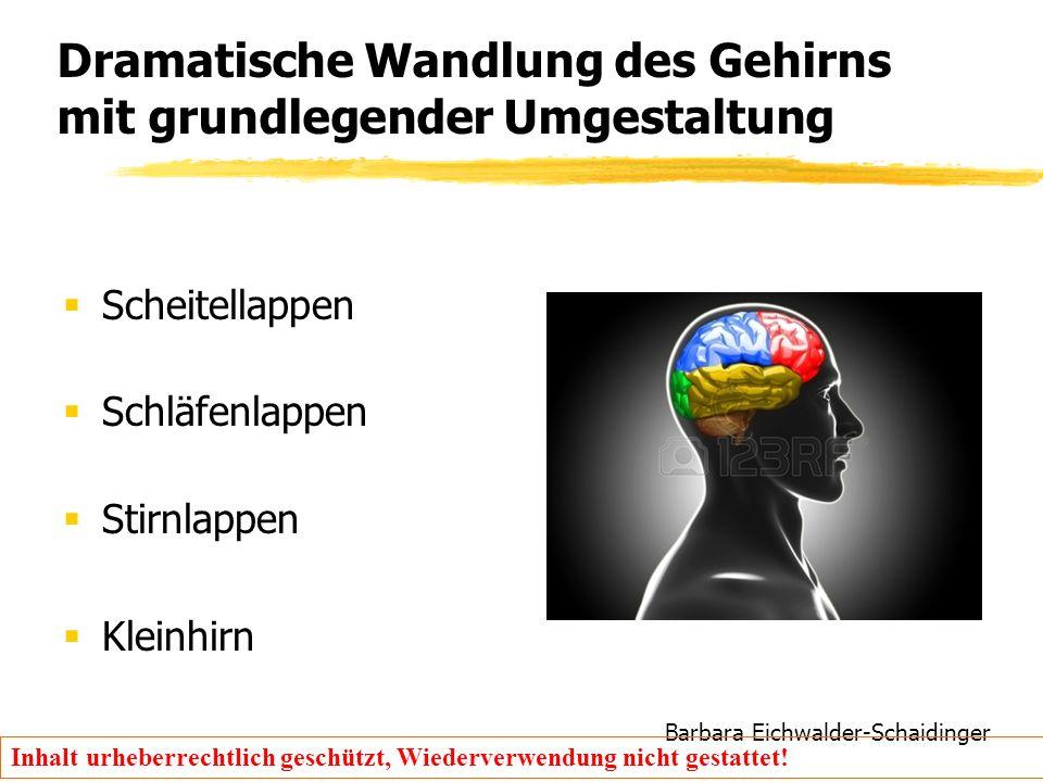 Barbara Eichwalder-Schaidinger Inhalt urheberrechtlich geschützt, Wiederverwendung nicht gestattet! Dramatische Wandlung des Gehirns mit grundlegender