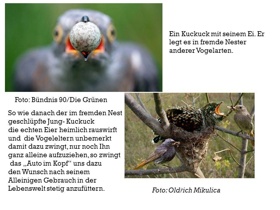 Foto: Old ř ich Mikulica Ein Kuckuck mit seinem Ei. Er legt es in fremde Nester anderer Vogelarten. So wie danach der im fremden Nest geschlüpfte Jung