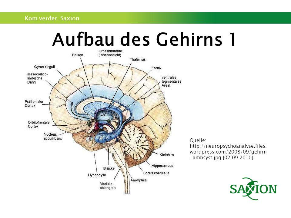 Kom verder. Saxion. Aufbau des Gehirns 1 Quelle: http://neuropsychoanalyse.files.