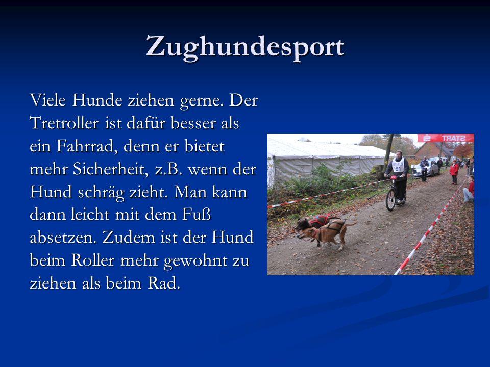Zughundesport Viele Hunde ziehen gerne.