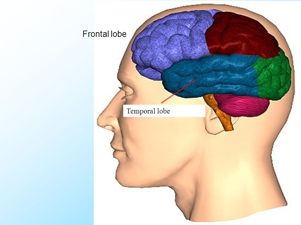 31 Referat Temporal lobe Frontal lobe