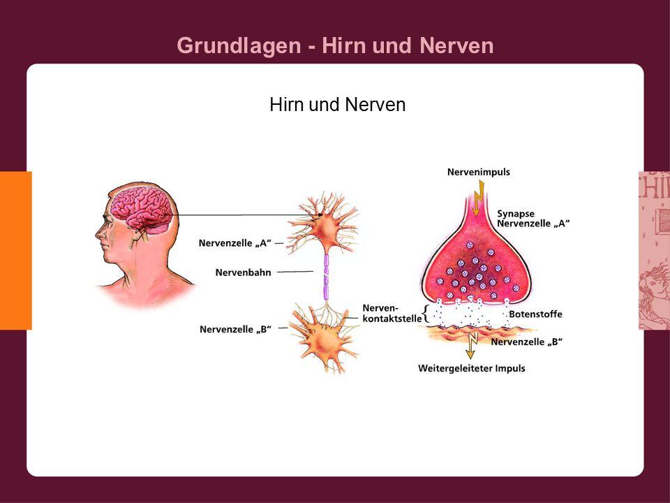 Grundlagen - Hirn und Nerven Hirn und Nerven