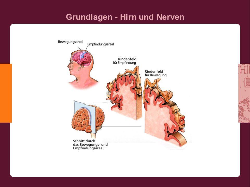 Grundlagen - Hirn und Nerven