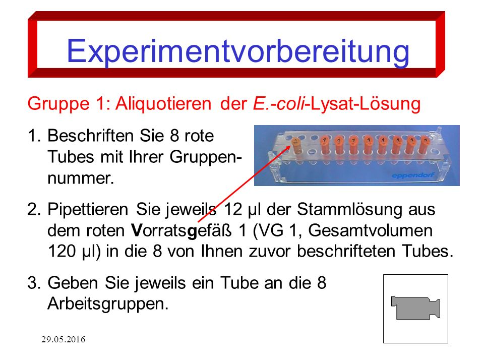 29.05.201610 Experimentvorbereitung Gruppe 1: Aliquotieren der E.-coli-Lysat-Lösung 1.Beschriften Sie 8 rote Tubes mit Ihrer Gruppen- nummer.