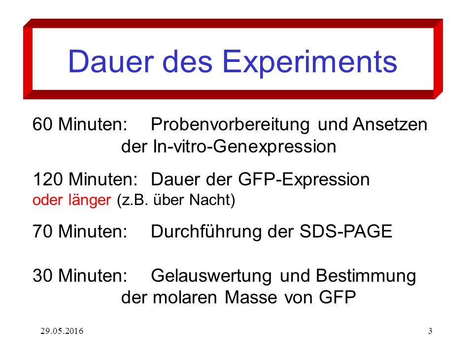 29.05.20163 60 Minuten:Probenvorbereitung und Ansetzen der In-vitro-Genexpression 120 Minuten:Dauer der GFP-Expression oder länger (z.B.