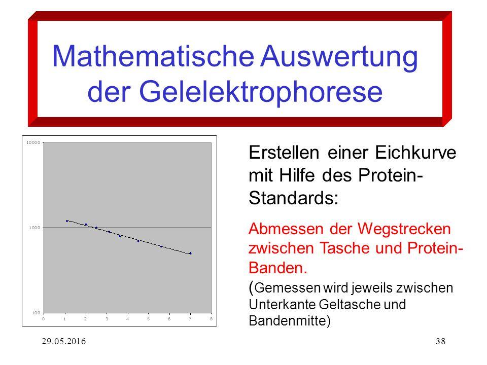 29.05.201638 Mathematische Auswertung der Gelelektrophorese Erstellen einer Eichkurve mit Hilfe des Protein- Standards: Abmessen der Wegstrecken zwischen Tasche und Protein- Banden.