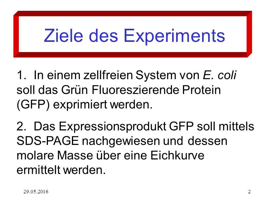 29.05.20162 1.In einem zellfreien System von E. coli soll das Grün Fluoreszierende Protein (GFP) exprimiert werden. 2.Das Expressionsprodukt GFP soll
