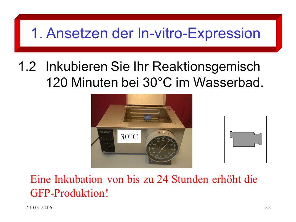 29.05.201622 1. Ansetzen der In-vitro-Expression 1.2Inkubieren Sie Ihr Reaktionsgemisch 120 Minuten bei 30°C im Wasserbad. 30°C Eine Inkubation von bi