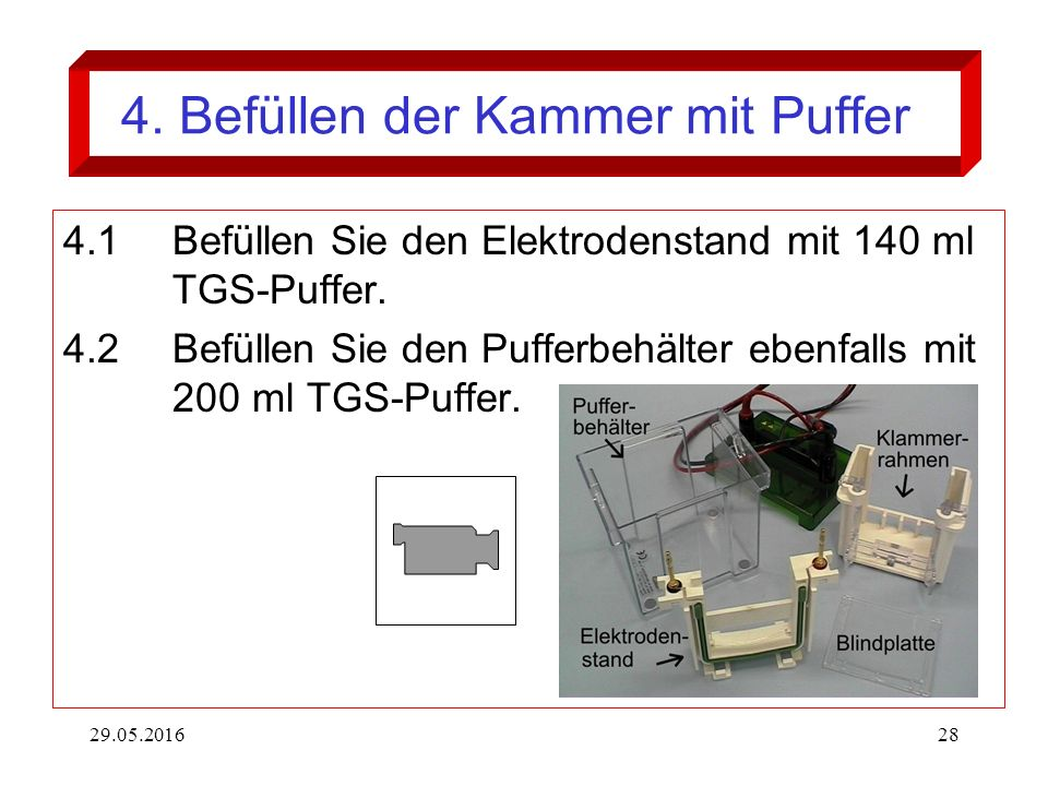29.05.201628 4. Befüllen der Kammer mit Puffer 4.1Befüllen Sie den Elektrodenstand mit 140 ml TGS-Puffer. 4.2Befüllen Sie den Pufferbehälter ebenfalls