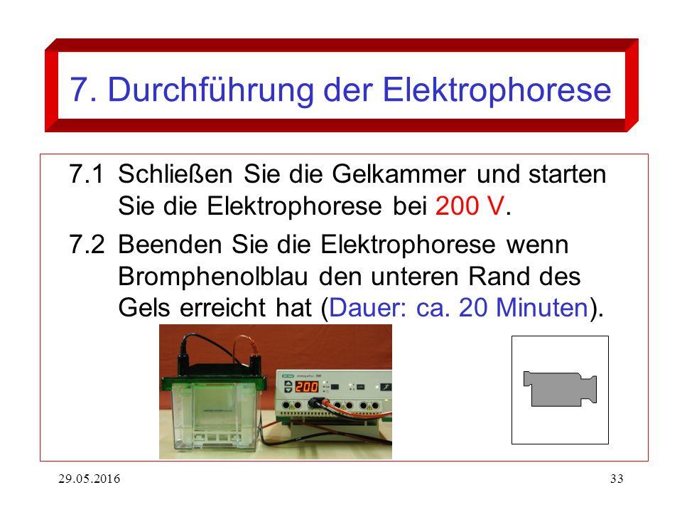 29.05.201633 7. Durchführung der Elektrophorese 7.1Schließen Sie die Gelkammer und starten Sie die Elektrophorese bei 200 V. 7.2Beenden Sie die Elektr