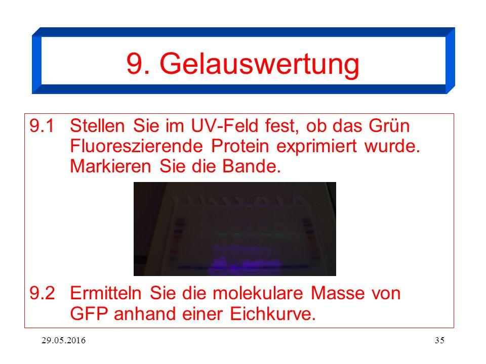29.05.201635 9. Gelauswertung 9.1 Stellen Sie im UV-Feld fest, ob das Grün Fluoreszierende Protein exprimiert wurde. Markieren Sie die Bande. 9.2Ermit