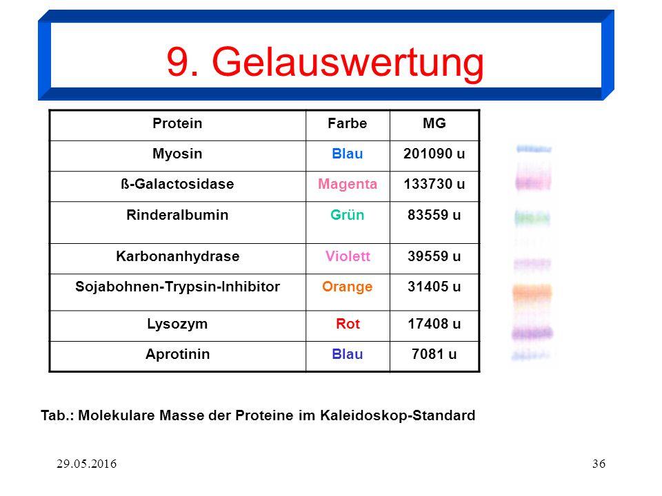 29.05.201636 ProteinFarbeMG MyosinBlau201090 u ß-GalactosidaseMagenta133730 u RinderalbuminGrün83559 u KarbonanhydraseViolett39559 u Sojabohnen-Trypsi