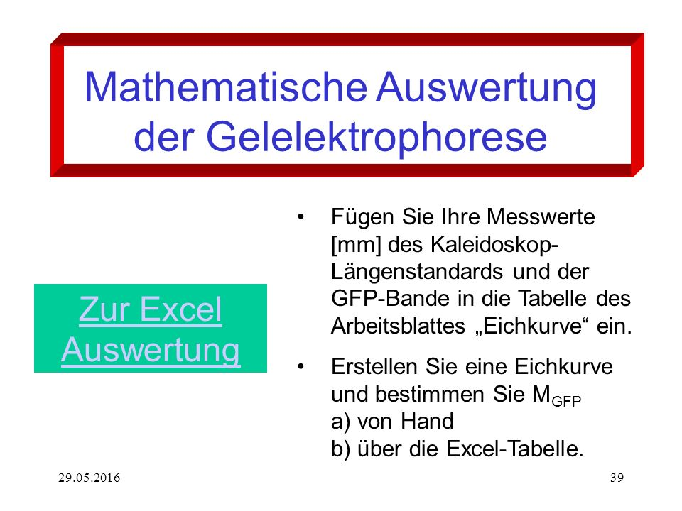 29.05.201639 Mathematische Auswertung der Gelelektrophorese Fügen Sie Ihre Messwerte [mm] des Kaleidoskop- Längenstandards und der GFP-Bande in die Ta