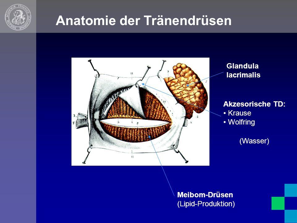 Anatomie der Tränendrüsen Meibom-Drüsen (Lipid-Produktion) Glandula lacrimalis Akzesorische TD: Krause Wolfring (Wasser)