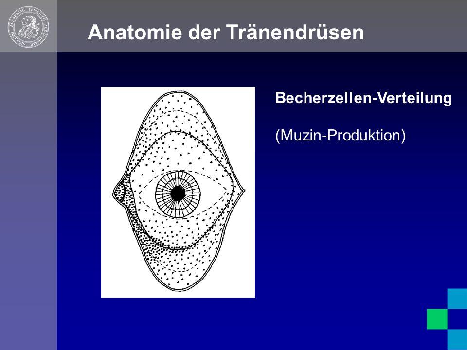 Anatomie der Tränendrüsen Becherzellen-Verteilung (Muzin-Produktion)