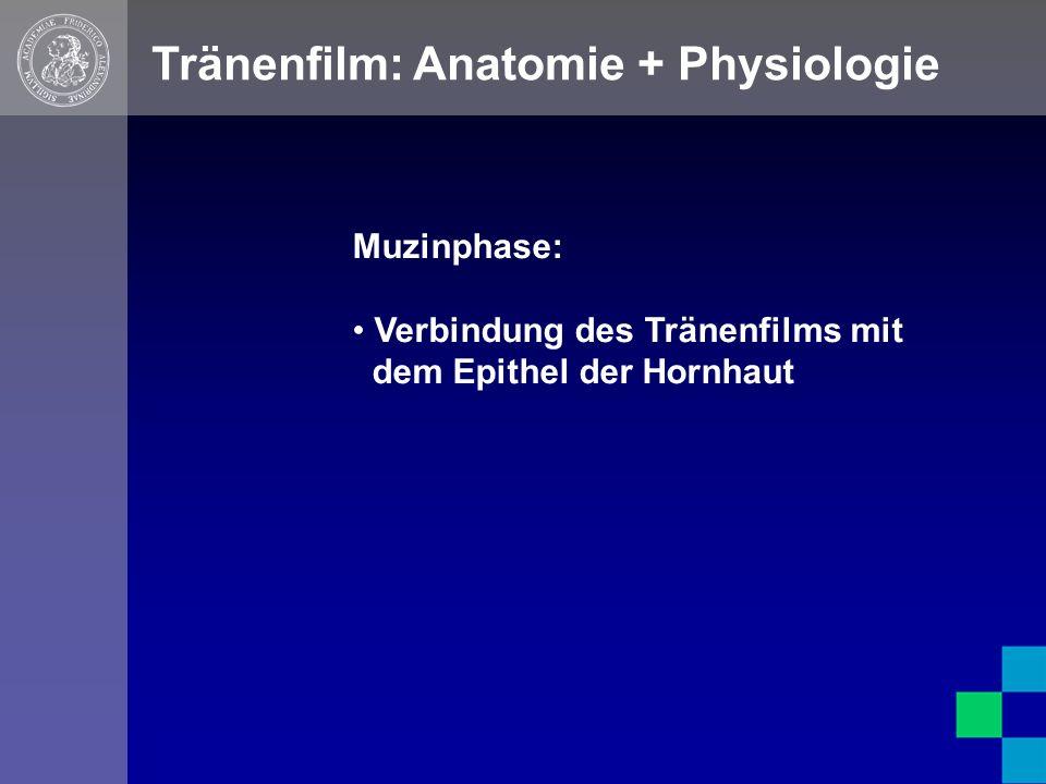 Tränenfilm: Anatomie + Physiologie Muzinphase: Verbindung des Tränenfilms mit dem Epithel der Hornhaut