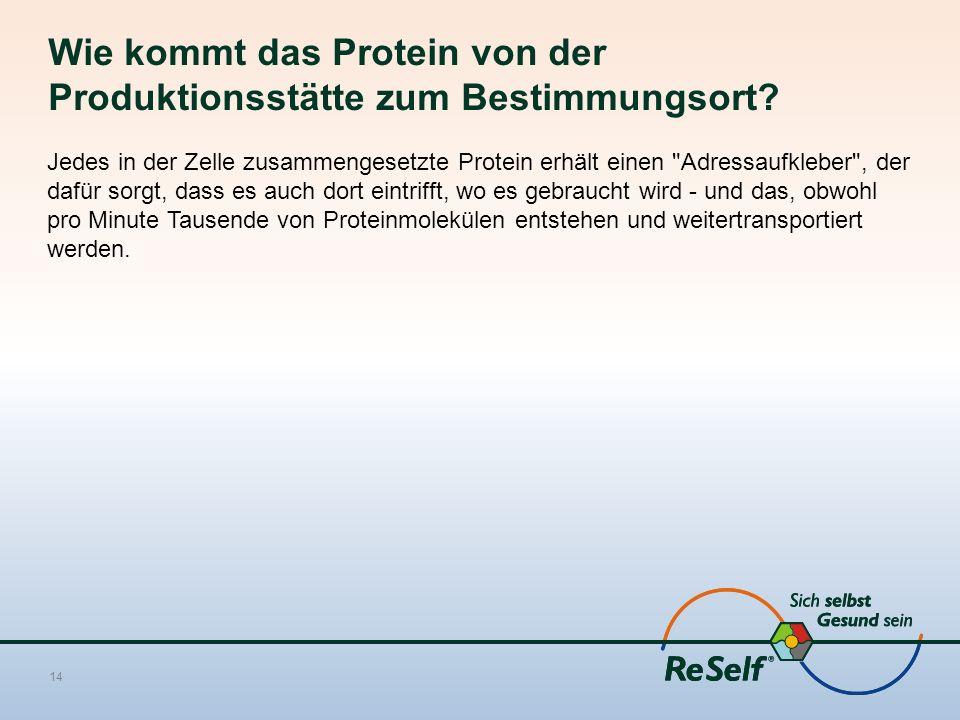 Wie kommt das Protein von der Produktionsstätte zum Bestimmungsort? Jedes in der Zelle zusammengesetzte Protein erhält einen