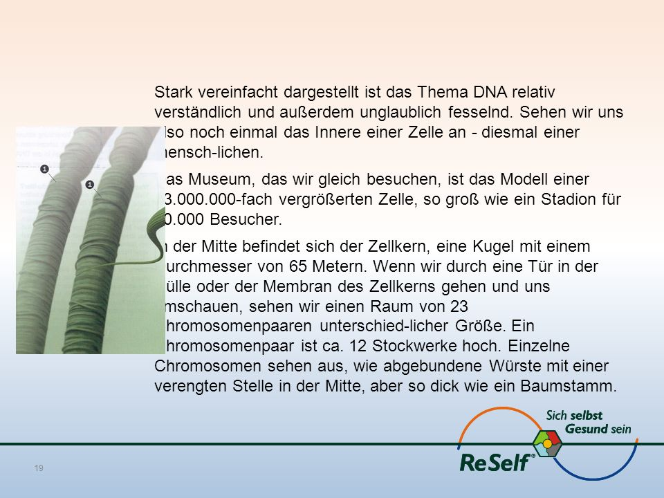 Stark vereinfacht dargestellt ist das Thema DNA relativ verständlich und außerdem unglaublich fesselnd. Sehen wir uns also noch einmal das Innere eine