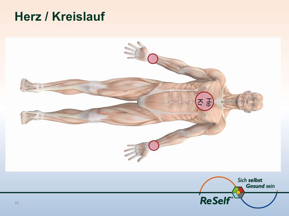 Herz / Kreislauf 55 He Kr