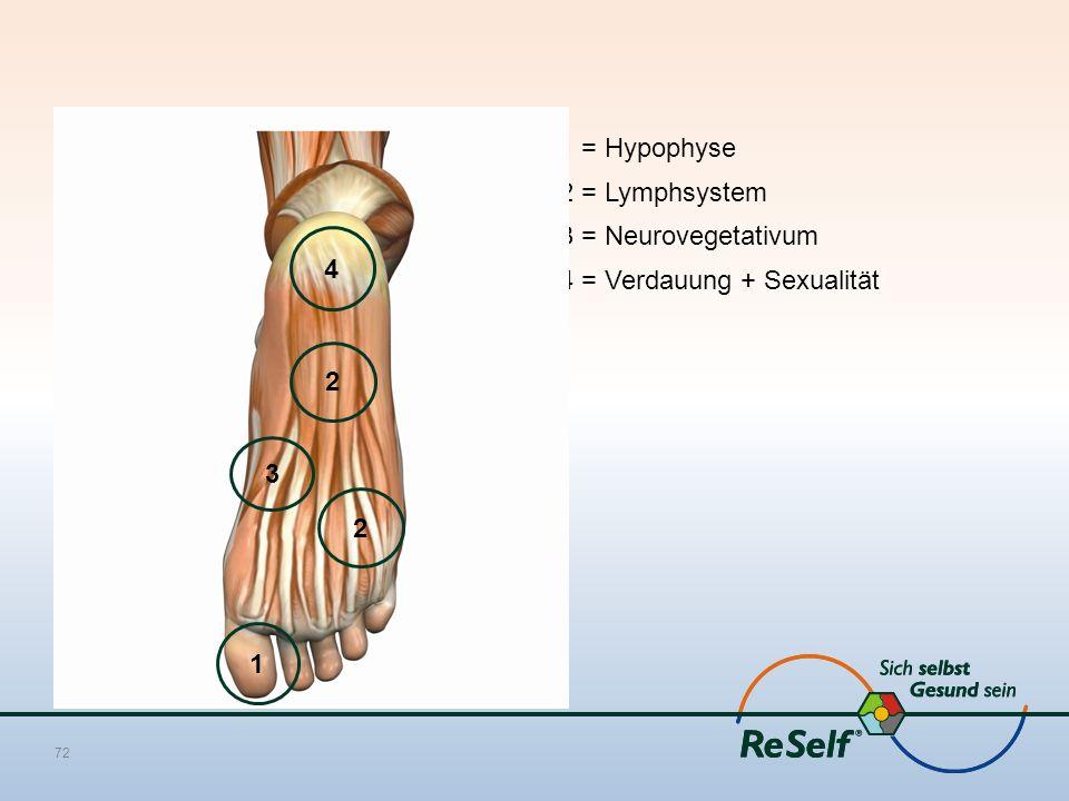 1 = Hypophyse 2 = Lymphsystem 3 = Neurovegetativum 4 = Verdauung + Sexualität 72 1 3 2 4 2