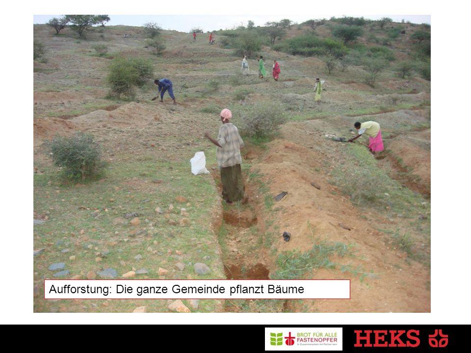Aufforstung: Die ganze Gemeinde pflanzt Bäume