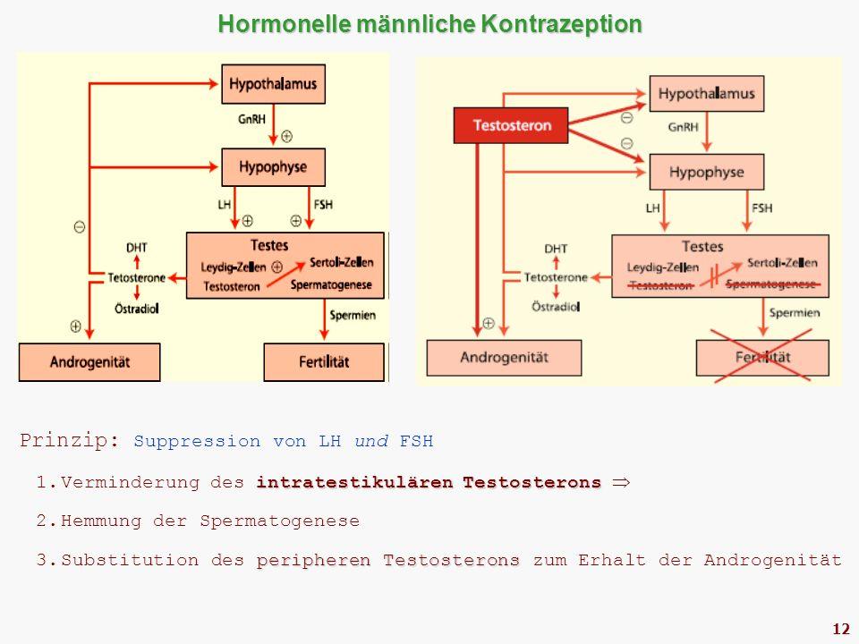 12 Hormonelle männliche Kontrazeption Prinzip: Suppression von LH und FSH intratestikulären Testosterons 1.Verminderung des intratestikulären Testosterons  2.Hemmung der Spermatogenese peripheren Testosterons 3.Substitution des peripheren Testosterons zum Erhalt der Androgenität