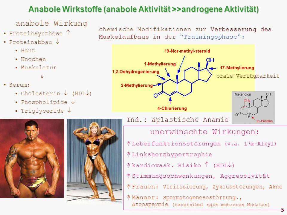 5 Anabole Wirkstoffe (anabole Aktivität >>androgene Aktivität) anabole Wirkung Proteinsynthese  Proteinabbau   Haut  Knochen  Muskulatur & Serum:  Cholesterin  (HDL  )  Phospholipide   Triglyceride  unerwünschte Wirkungen:  Leberfunktionsstörungen (v.a.