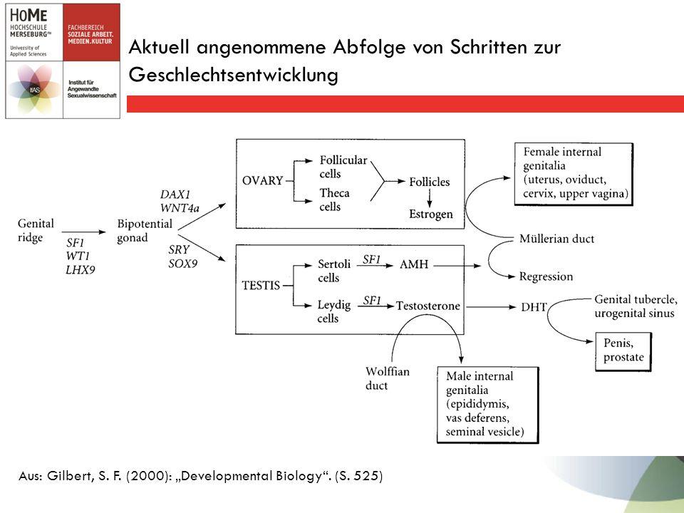 Aktuell angenommene Abfolge von Schritten zur Geschlechtsentwicklung Aus: Gilbert, S.