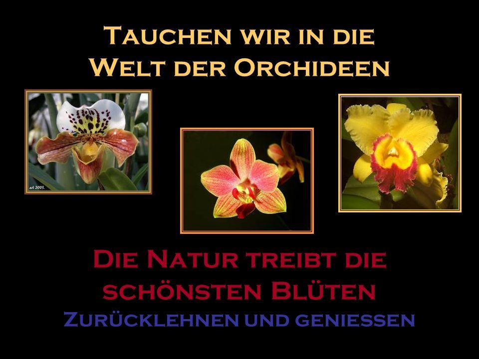 Tauchen wir in die Welt der Orchideen Die Natur treibt die schönsten Blüten Zurücklehnen und geniessen