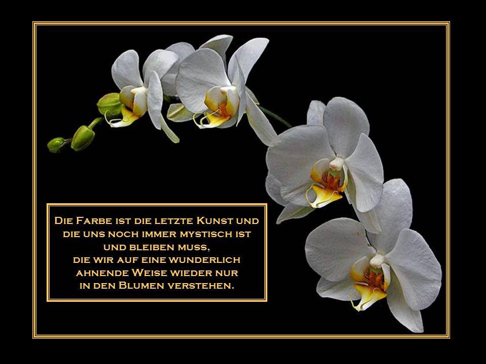 Abgefallene Blüten lassen ihren Duft zurück.