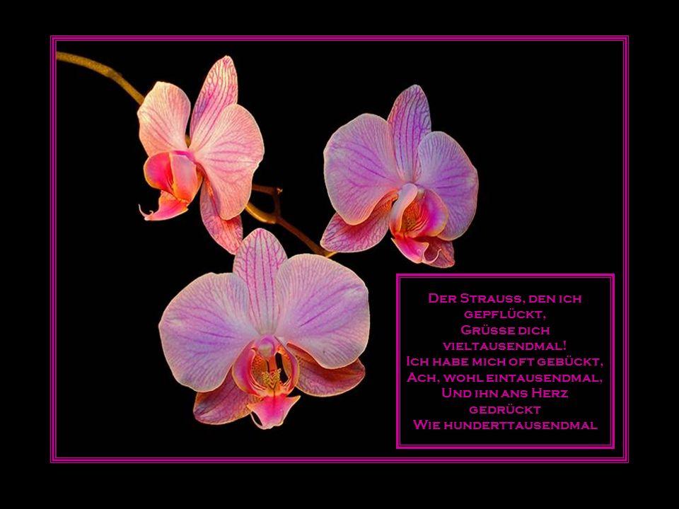Die Farbe ist die letzte Kunst und die uns noch immer mystisch ist und bleiben muss, die wir auf eine wunderlich ahnende Weise wieder nur in den Blumen verstehen.