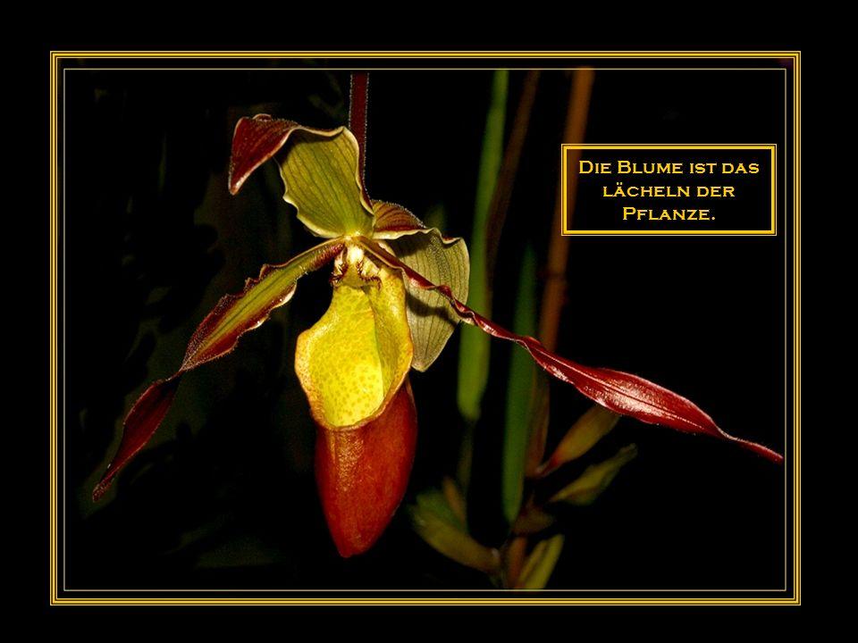 Anmut und Schönheit entzücken das Auge, doch mehr als beide die Blumen des Feldes.
