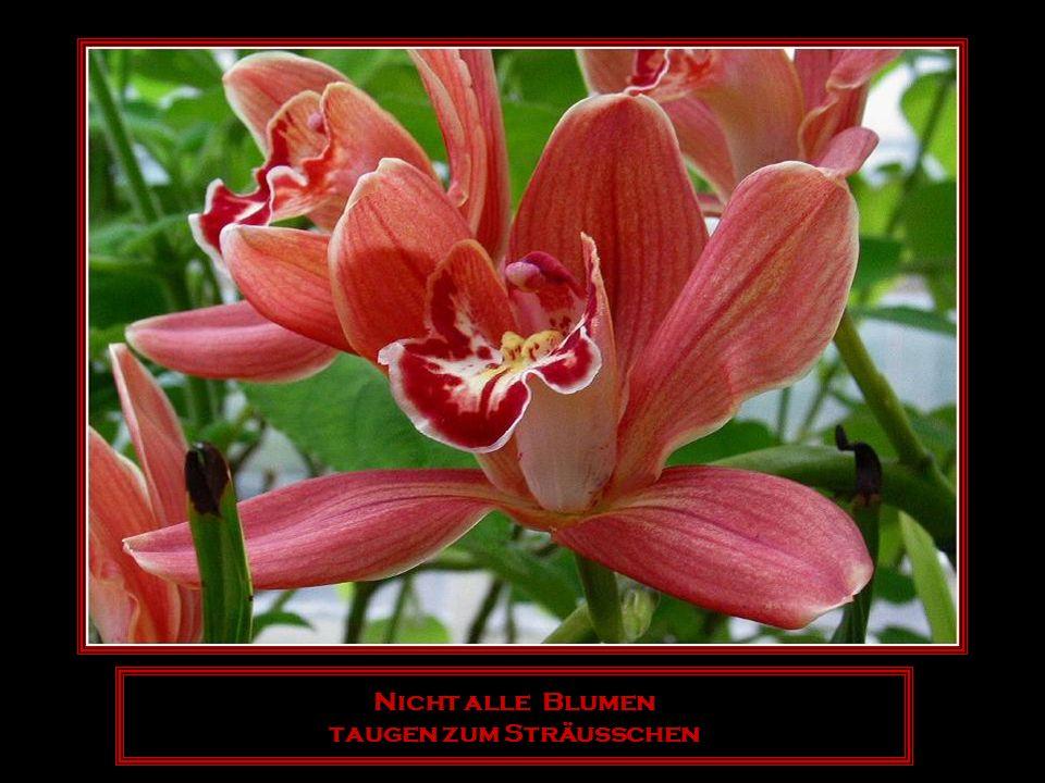 Die Blume ist das lächeln der Pflanze.