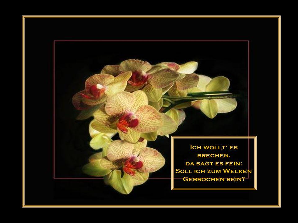 Nicht alle Blumen taugen zum Sträusschen