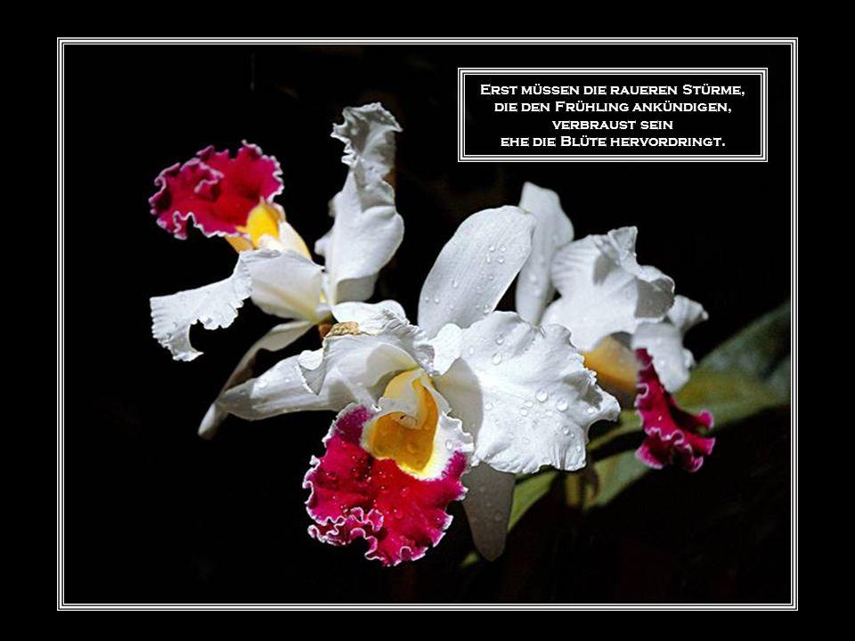 Erst müssen die raueren Stürme, die den Frühling ankündigen, verbraust sein ehe die Blüte hervordringt.