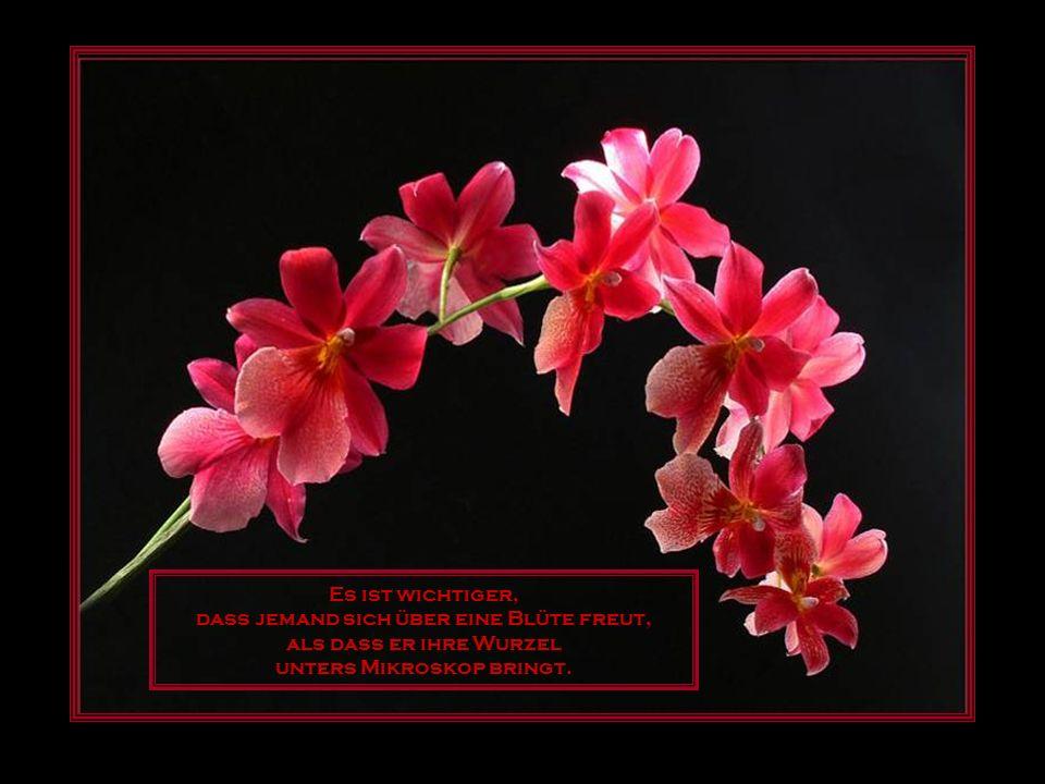 Es ist wichtiger, dass jemand sich über eine Blüte freut, als dass er ihre Wurzel unters Mikroskop bringt.