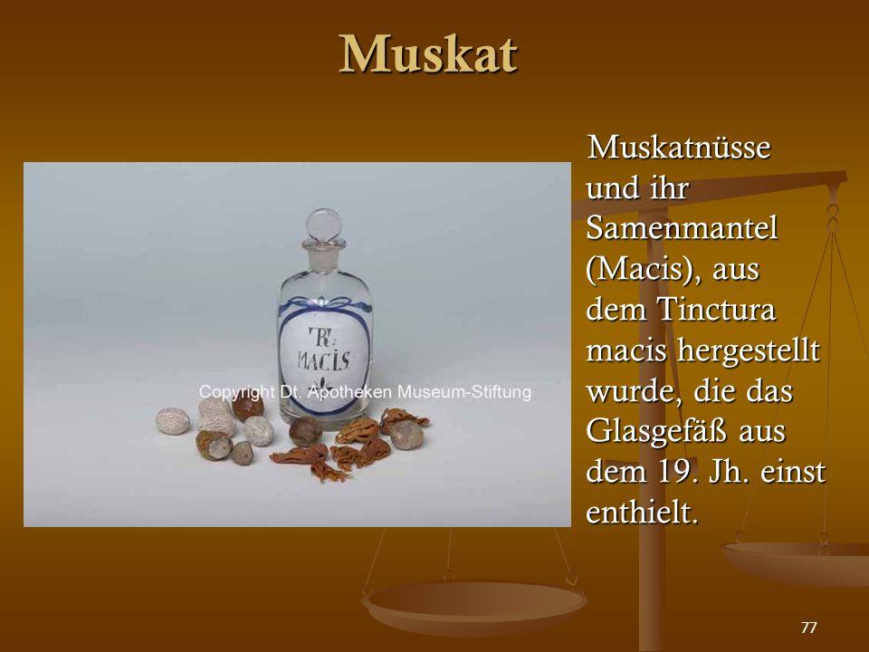 77 Muskat Muskatnüsse und ihr Samenmantel (Macis), aus dem Tinctura macis hergestellt wurde, die das Glasgefäß aus dem 19. Jh. einst enthielt.