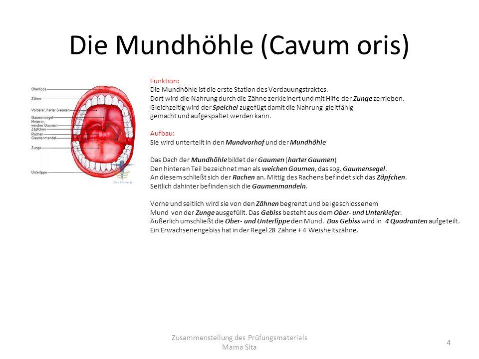 Die Mundhöhle (Cavum oris) Funktion: Die Mundhöhle ist die erste Station des Verdauungstraktes. Dort wird die Nahrung durch die Zähne zerkleinert und