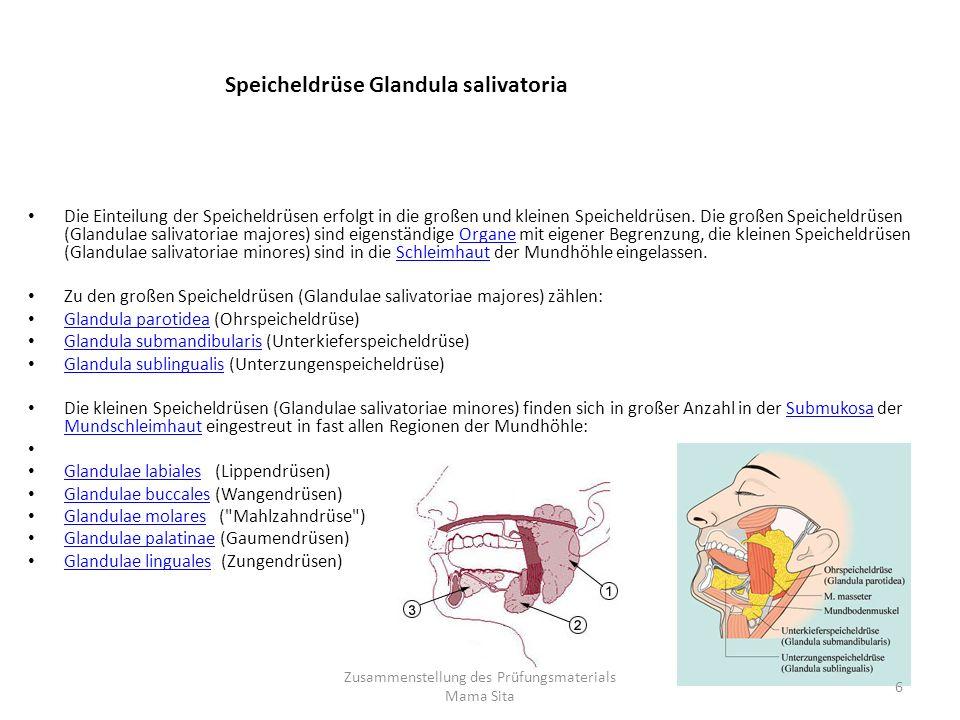 Die Einteilung der Speicheldrüsen erfolgt in die großen und kleinen Speicheldrüsen. Die großen Speicheldrüsen (Glandulae salivatoriae majores) sind ei
