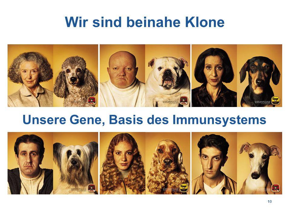 10 Wir sind beinahe Klone Unsere Gene, Basis des Immunsystems