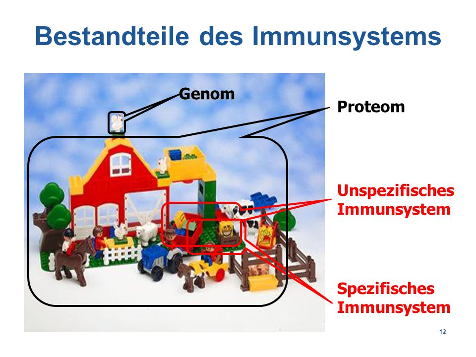 12 Bestandteile des Immunsystems Proteom Unspezifisches Immunsystem Spezifisches Immunsystem Genom