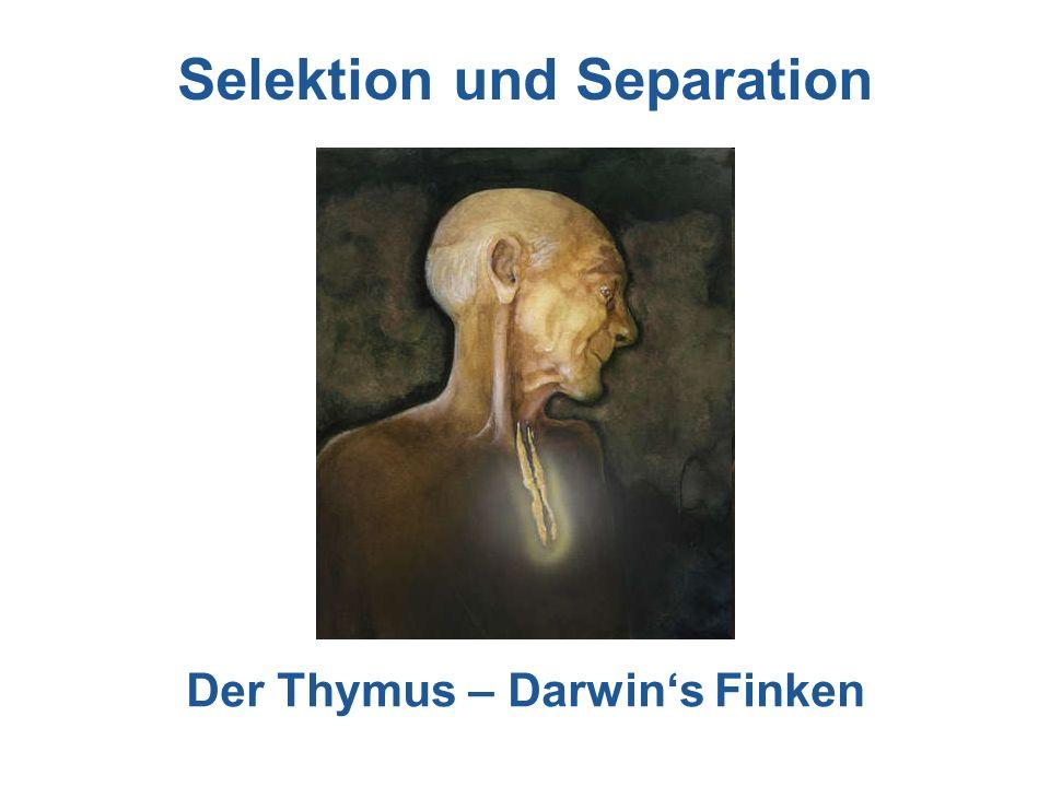 Selektion und Separation Der Thymus – Darwin's Finken