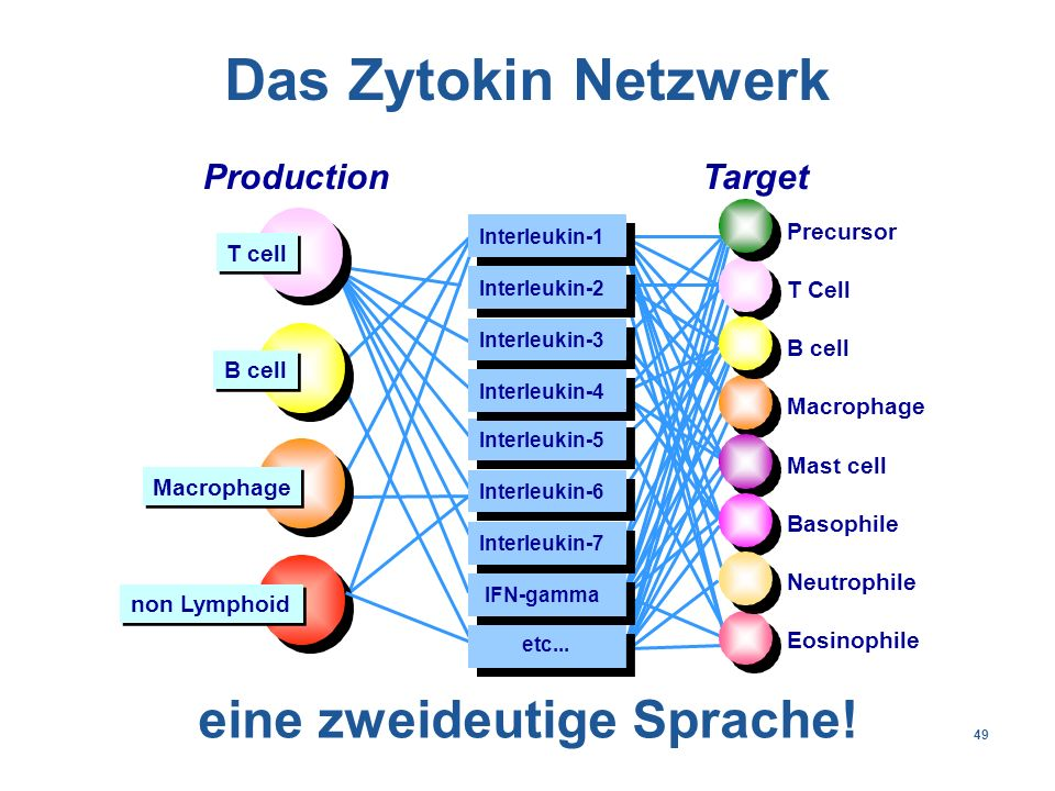 49 Precursor T Cell B cell Macrophage Mast cell Basophile Neutrophile Eosinophile ProductionTarget Interleukin-1 Interleukin-2 Interleukin-3 Interleukin-4 Interleukin-5 Interleukin-6 IFN-gamma etc...