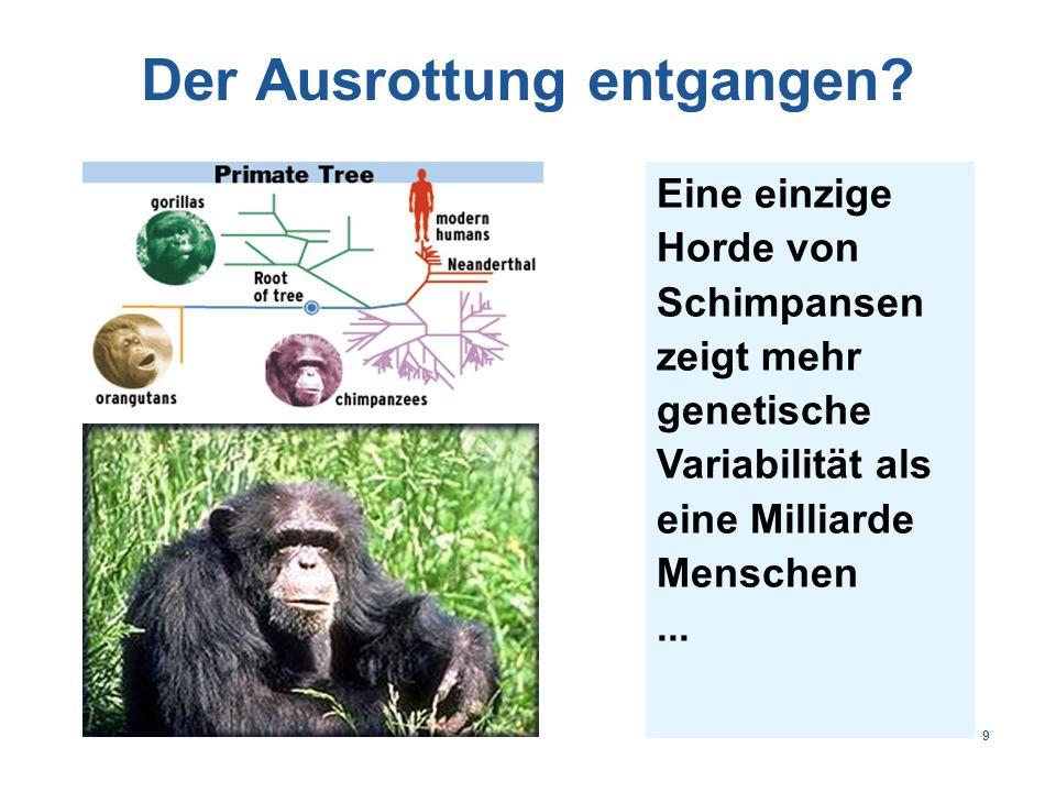 Theoretische Rekombinationen H Kette Gensegmente L/H Ketten Diversität V20020010020'000 D200400'000 J6512'000'000 D-frame0.33- Nur ein Frame.