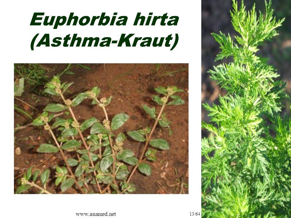 www.anamed.net 13/64 Euphorbia hirta (Asthma-Kraut)
